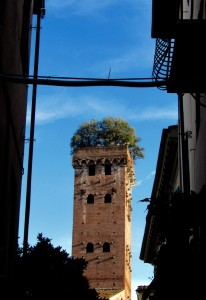 Guinigi Tower in Lucca.